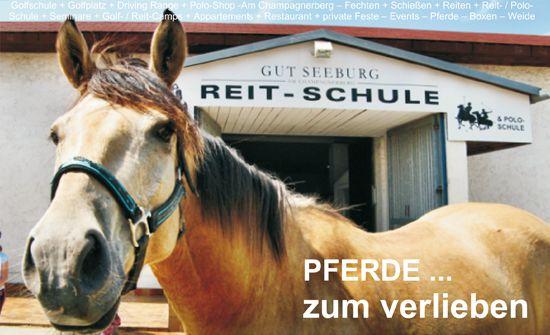 Das Pferd - Bester Freund UND Sportkamerad
