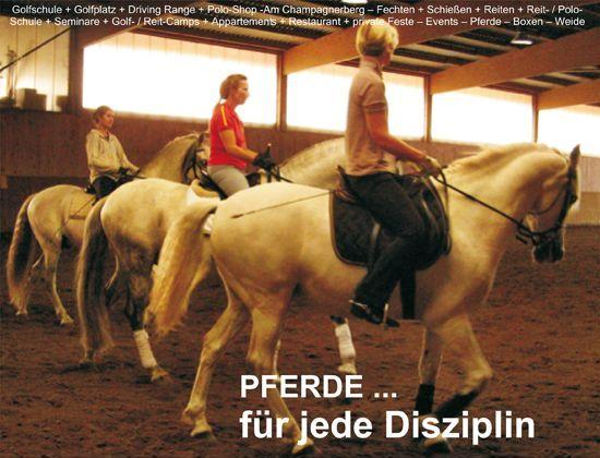 """""""Das Pferd ist kostenlos!"""""""